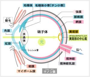 黄斑部中心窩